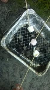 Toast marshmallows
